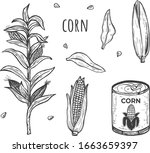 vector illustration of corn... | Shutterstock .eps vector #1663659397