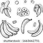 vector illustration of banana... | Shutterstock .eps vector #1663662751