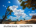 Joshua Tree National Park Yucca ...