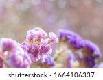 Blurred Image Of Limonium...