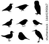 Silhouettes Of Birds  Set ...
