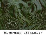 Monstera Green Leaves Or...