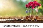 garden flowers  plants and... | Shutterstock . vector #1664446447