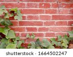 Wall Of Red Brick Entwined With ...