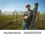 Mandatory Credit: Photo by Mint Images/Shutterstock (3586807a) Model Released - A vineyard with young vines being trained along wires to produce a good grape harvest. VARIOUS