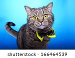 Stock photo funny cat with yellow bow tie 166464539