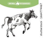 breeding cow. animal husbandry. ...   Shutterstock .eps vector #1664774467