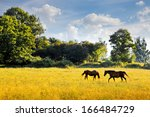 Horses Graze In The Meadow....