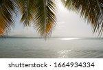 Palm And Sea And Sundown Over...