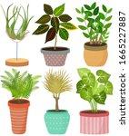 vector set indoor house plant... | Shutterstock .eps vector #1665227887