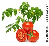 Tomatoes With Twig Or Branch On ...