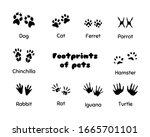 Footprints Of Animals. Animal...
