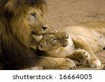 lion couple | Shutterstock . vector #16664005