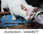 injured white cat   one  ... | Shutterstock . vector #166668377