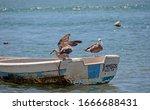 Three Seagulls Sitting On A...