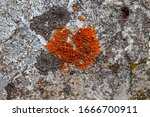 A Photo Of A Common Orange...