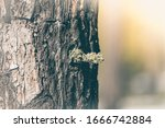 Forest Moss On Pine Tree. For...
