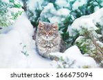 Stock photo cute kitten sitting on the snowy pine tree 166675094