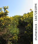 Rural Path Surrounded By Yellow ...