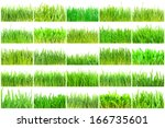fresh green grass isolated on... | Shutterstock . vector #166735601