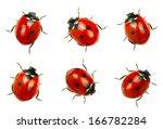 Stock photo  ladybugs isolated on white background 166782284