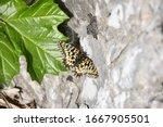 Gibraltar Upper Rock Monarch...