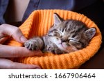 Little Kitten Sleeping In The...