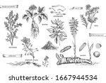 set vintage hand drawn sketch... | Shutterstock .eps vector #1667944534