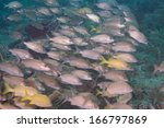a school of fish in tropical... | Shutterstock . vector #166797869