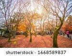 kyoto  japan   november 30 ... | Shutterstock . vector #1668589837