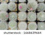 cactus beautiful plant summer...   Shutterstock . vector #1668639664