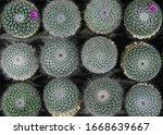 cactus beautiful plant summer...   Shutterstock . vector #1668639667