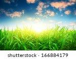 Green Corn Field Under Colorfu...