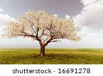 blossoming tree | Shutterstock . vector #16691278