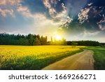 oilseed rape spring field with... | Shutterstock . vector #1669266271