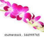 pink orchid | Shutterstock . vector #166949765