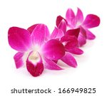 pink orchids | Shutterstock . vector #166949825