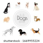 different dog breeds and mixed...   Shutterstock .eps vector #1669955224