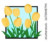 Yellow Tulips In The Picture...
