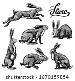 wild hares set. rabbits are... | Shutterstock .eps vector #1670159854
