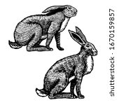 Wild Hares. Rabbits Are Sitting....