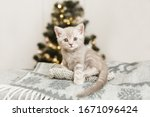 Small Cute Kitten Is Sitting On ...