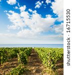 landscaped for vineyard on the...