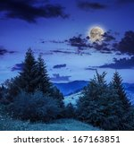 coniferous forest on a steep mountain slope at night - stock photo