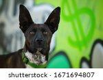 Cute Cross Breed Dog With Big...