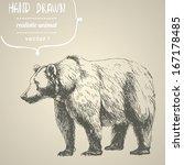 bear. hand drawn vector...   Shutterstock .eps vector #167178485