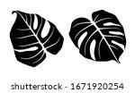 monstera leaves. set of vector... | Shutterstock .eps vector #1671920254