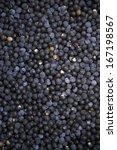harvest of fresh acai berries... | Shutterstock . vector #167198567