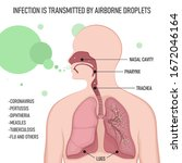 infection is transmitted by... | Shutterstock .eps vector #1672046164