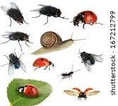 Collection of insects isolated...